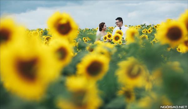 Ảnh cưới đẹp giữa mùa hoa hướng dương vàng rực rỡ ở Đà Lạt (3) tại Cưới hỏi trọn gói 365