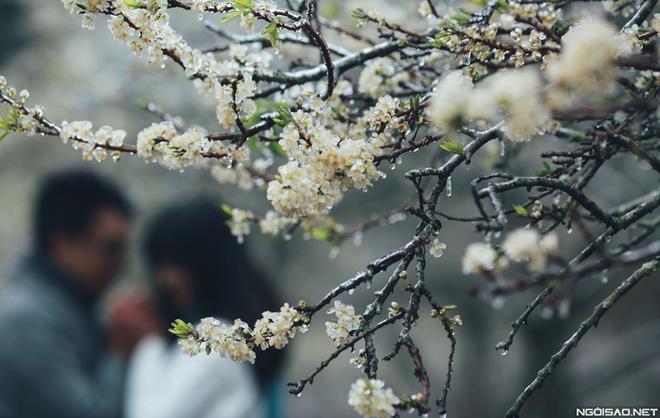 Ảnh cưới đẹp với băng tuyết của cặp đôi Sài Gòn tại Mộc Châu (04) tại Cưới hỏi trọn gói 365