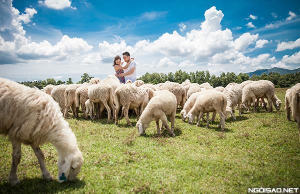 Ảnh cưới độc và lạ của cô dâu chú rể tươi trẻ cùng đàn cừu (05) tại Cưới hỏi trọn gói 365
