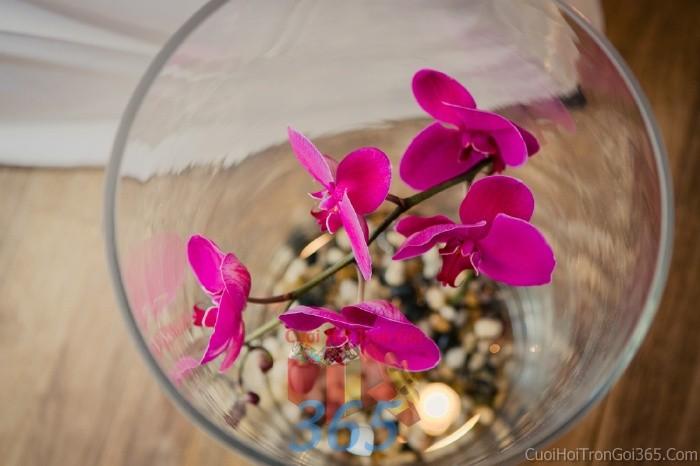 Phụ kiện đám cưới lọ hoa thủy tinh lan hồ điệp tím dùng để trang trí bàn ký tên đón khách, không gian tiệc cưới nhà PKC65 : Mẫu cưới hỏi trọn gói 365 của công ty dịch vụ trang trí nhà tiệc cưới hỏi đẹp rẻ uy tín ở tại quận Tân Phú Sài Gòn TPHCM Gò Vấp